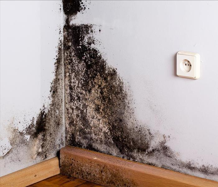 Why SERVPRO What To Do If Your Building Has Mold Damage