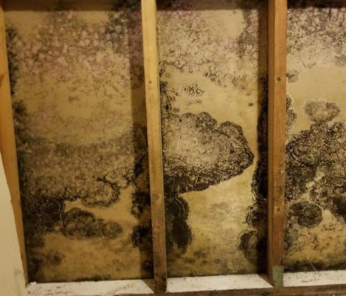 Mold growth present behind removed drywall.