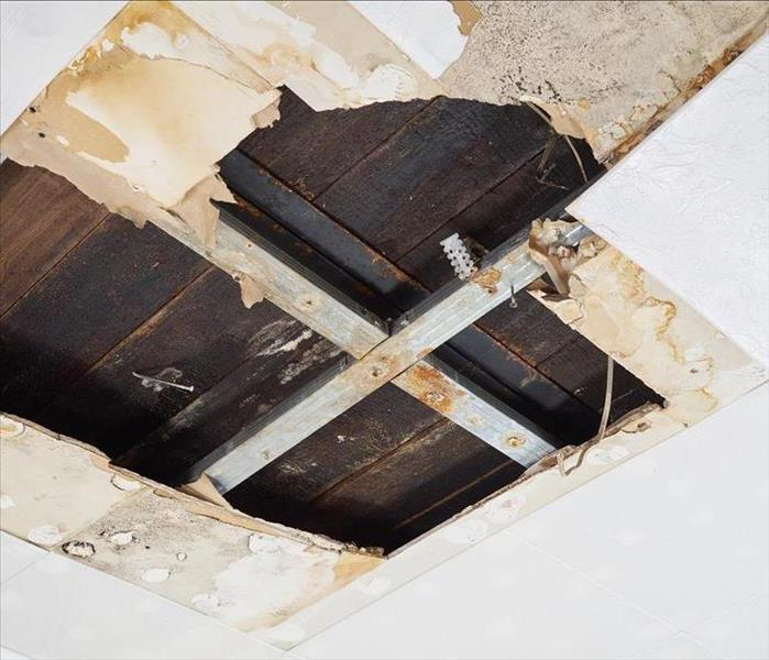 Mold Remediation What to do when mold strikes